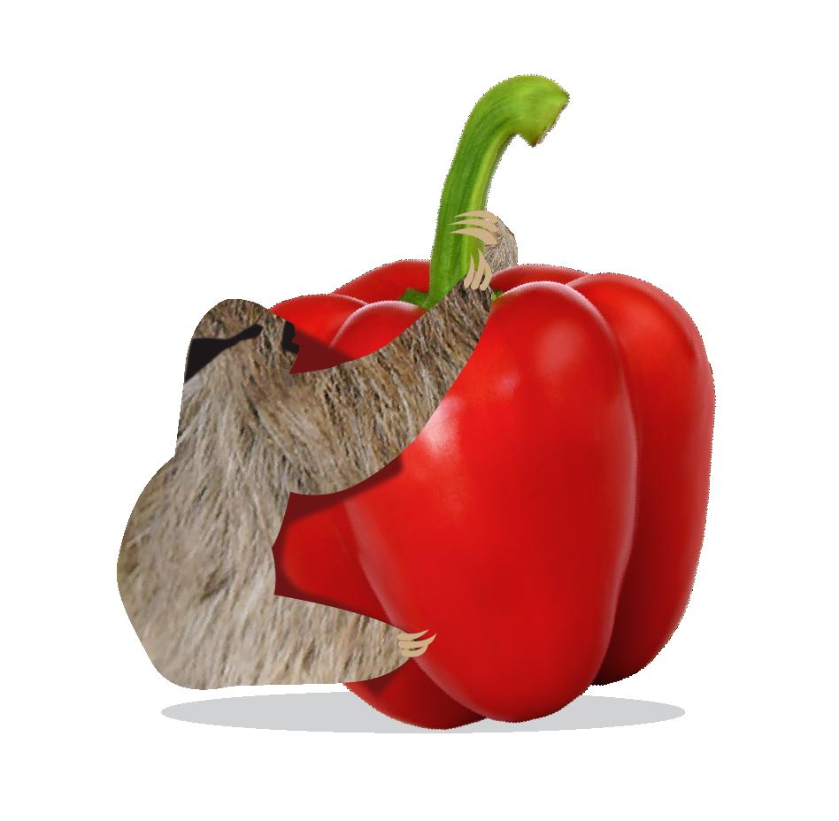 Bazqet luiaard op paprika
